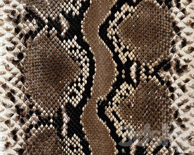 animal patterns (Hidden) 2