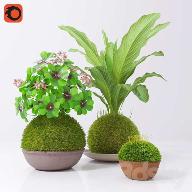 3d models plant kokedama set for Plante kokedama