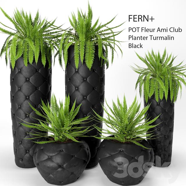 Fleur Ami 3d models plant fern pots fleur ami