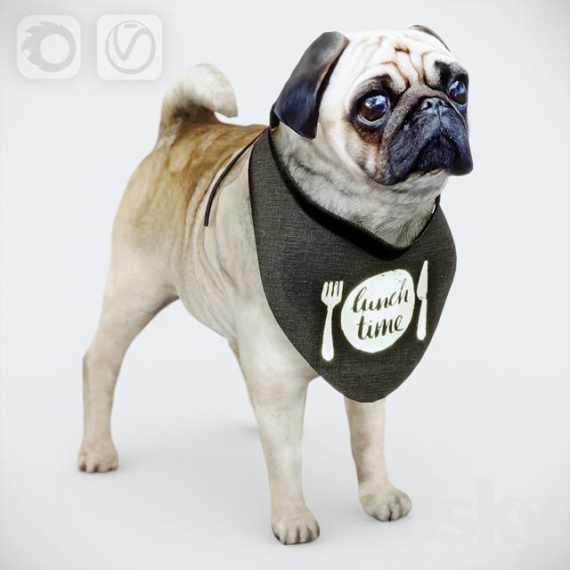 Cute Pug (vray + corona)
