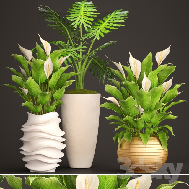 A collection of plants in pots. 51