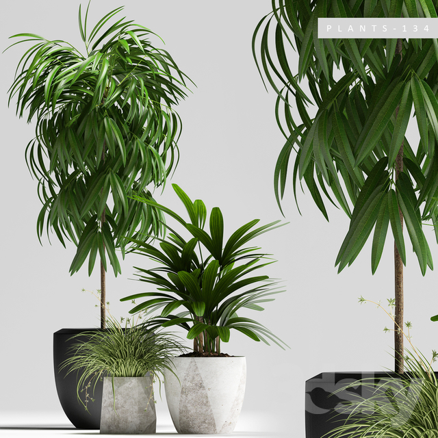PLANTS 134