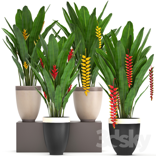 Plant collection 249.