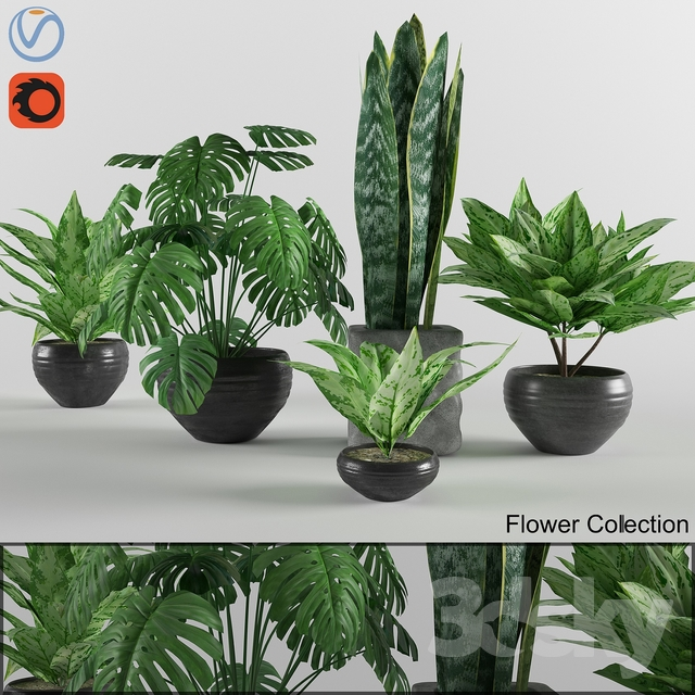 Flower colection