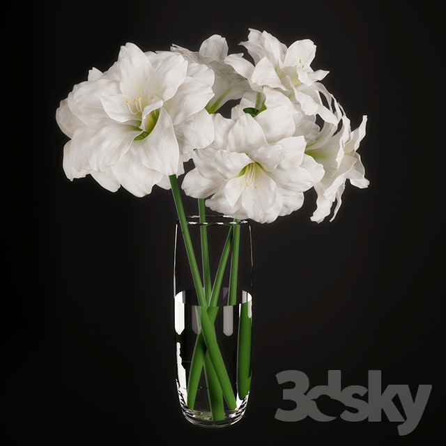 Hippeastrum (Amaryllis) bouquet