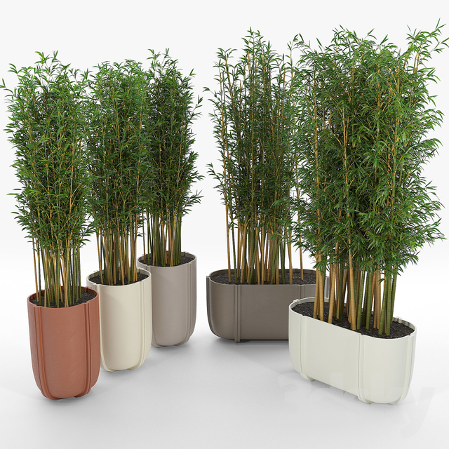 CASSERO LONG Bamboo