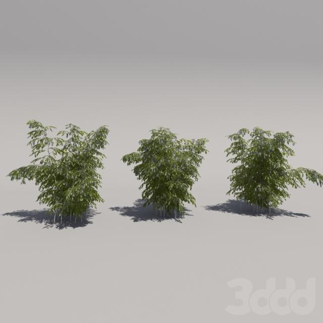 Куст цветущий, три итерации