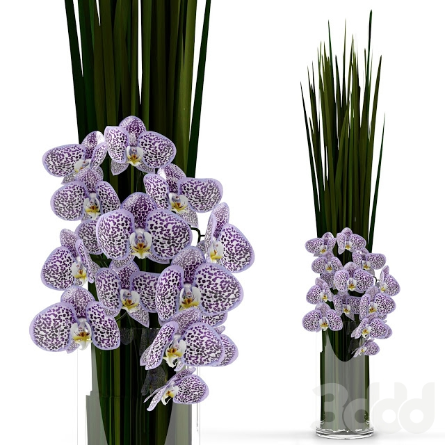 Orchids with grass in glass vase