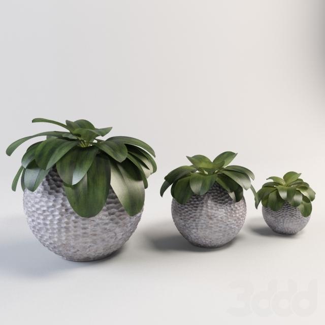 Большая сферическая ваза с растением