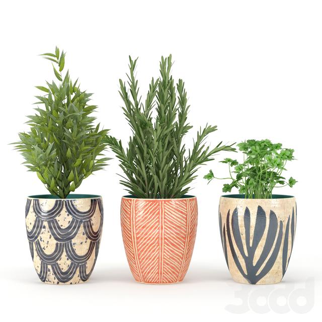 Kitchen_Plant