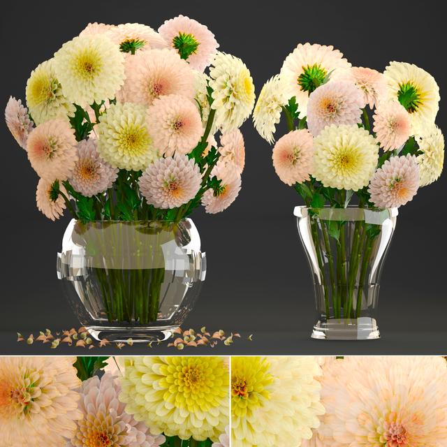 Коллекция цветов 9. Георгины.