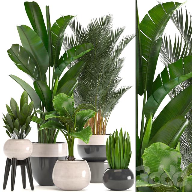 Коллекция растений 221.