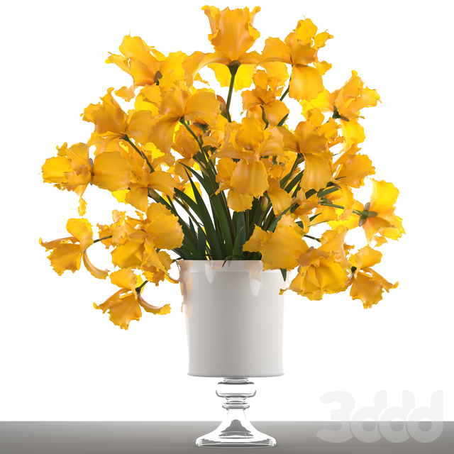 Коллекция цветов 47. Желтые Ирисы.
