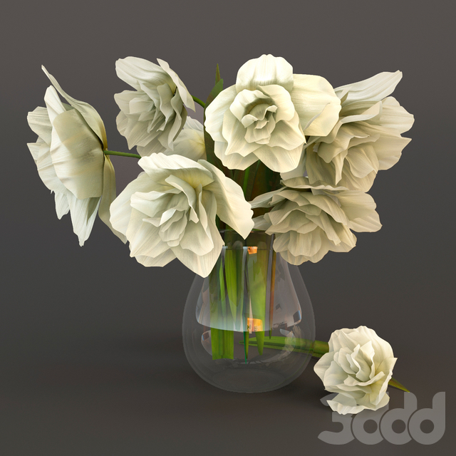 White tulips in a glass vase