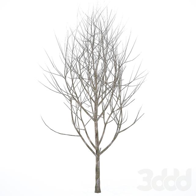 Голое дерево 01