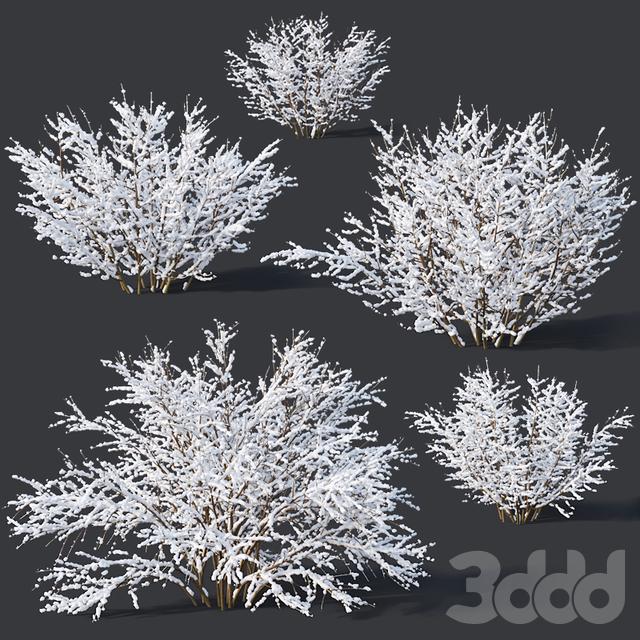 Forsythia # 9. Winter. 7 sizes