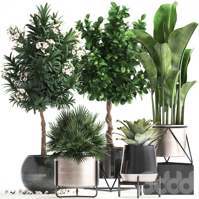 Коллекция растений 297.