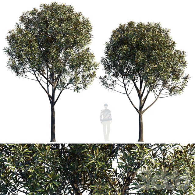Street tree V6