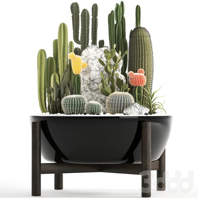 Коллекция растений 305. Cactus set. На замену