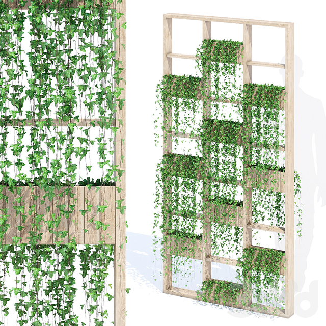 Green wall ivy