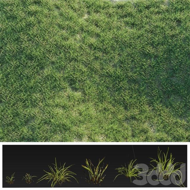 Details Grass
