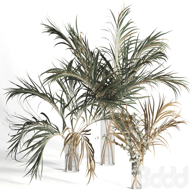 Dry palm leaves in vases