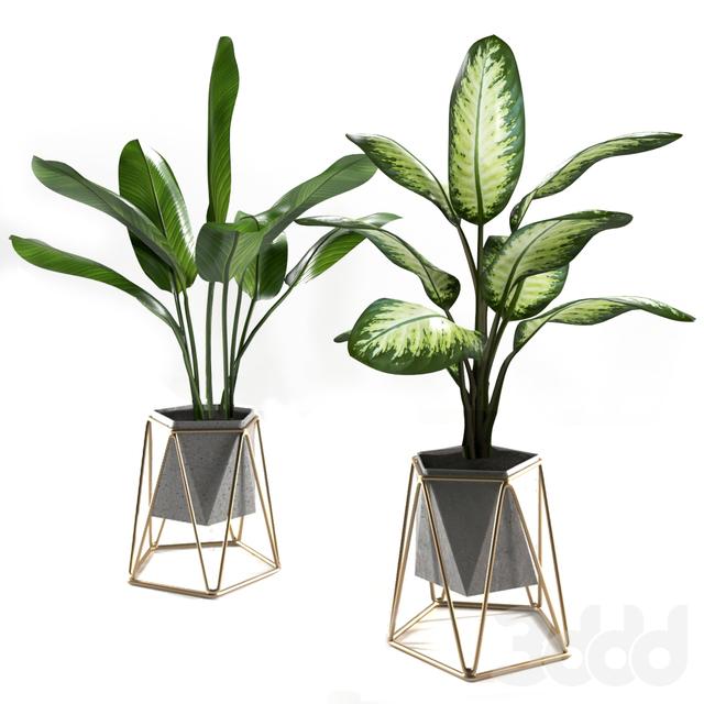 Plants set 3
