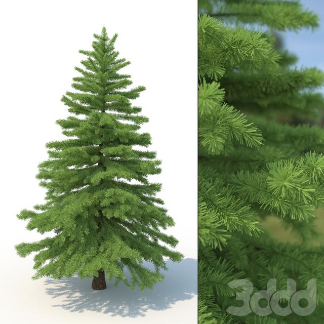 3d модель дерева ель No 2