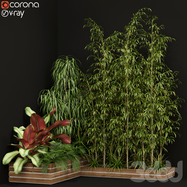 Plants collection 201