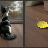 Кошачья осень, детали