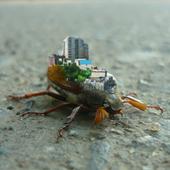 Городской жук