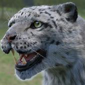 Irbis (Snow Leopard)