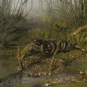 Обыкновенное болото