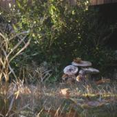 Домик в лесу