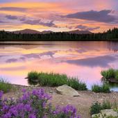 озеро, лес, закат