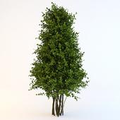 Bush-cone
