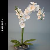 """Composition """"Pauline_H"""" Orchid Blanc"""