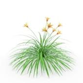 Hemerocallis (Лилейник)