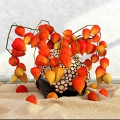 physalis_in_a_vase