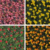 texture flower beds