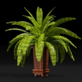 PLANTS 9