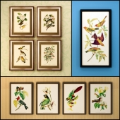 The picture in the frame: 17 pieces (collection 61) Birds