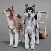 Dog team: Huskies, sled, pulka.