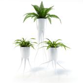 Tim van de Weerd & Chlorophytum & Fern
