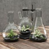 Florariumy flasks