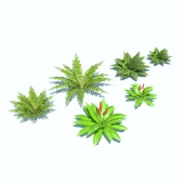 Tropical bushes low-poly