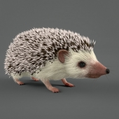 Hedgehog (Vray)