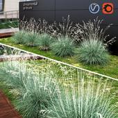 Ornamental grass dry blue