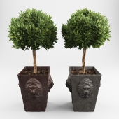 Ornamental trees 2
