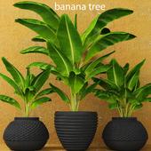 Banana palms. 3 pcs.